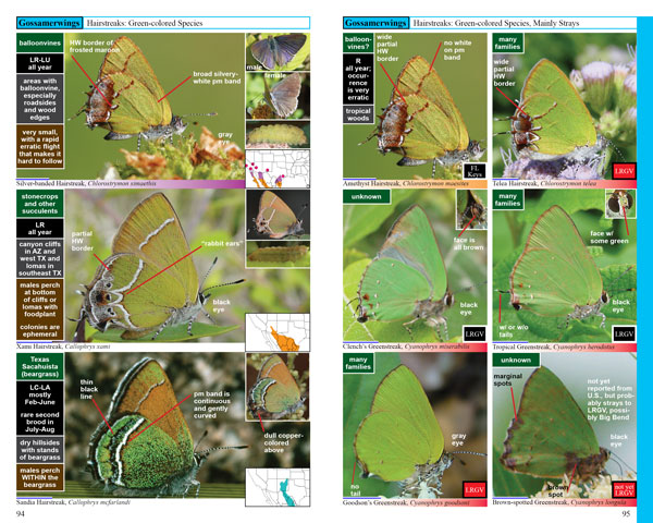 Swift Guide to North American Butterflies, green hairstreaks